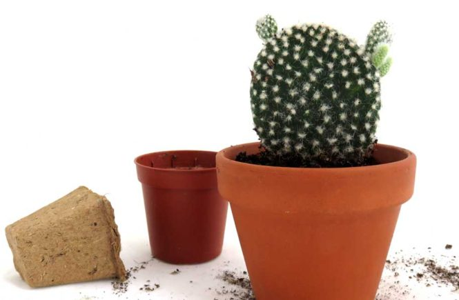 how-to-repot-cactus