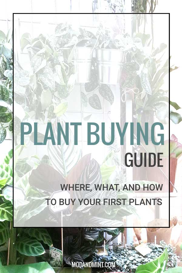 Plant buying guide