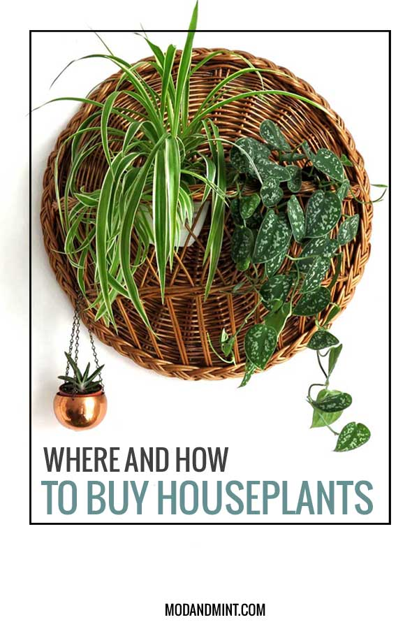Where to buy houseplants