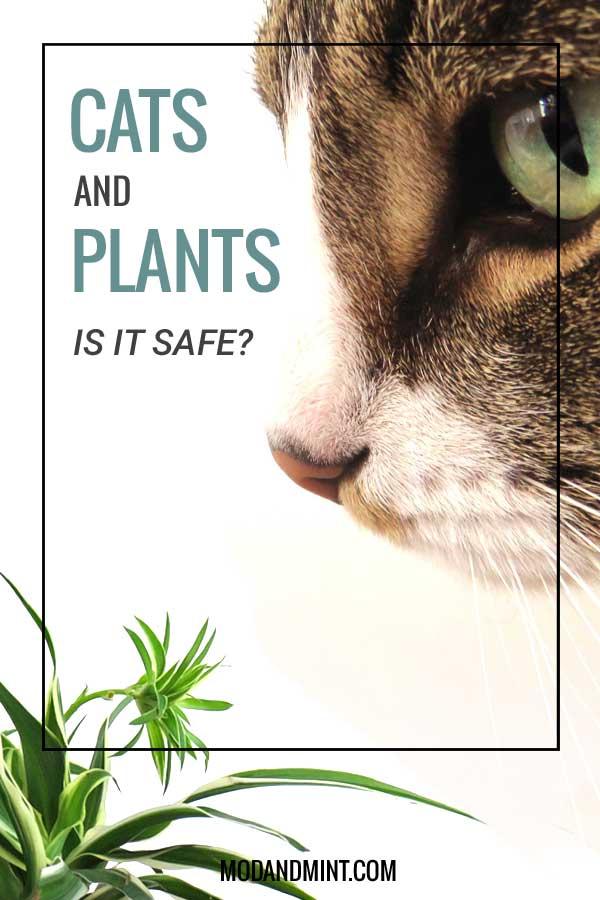 cat-safe-plants