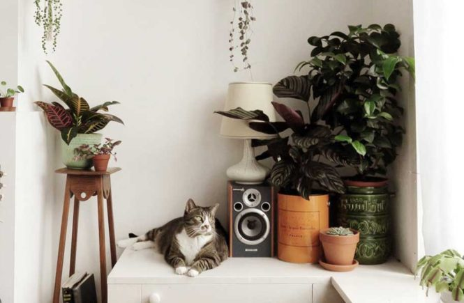 cats-and-plants
