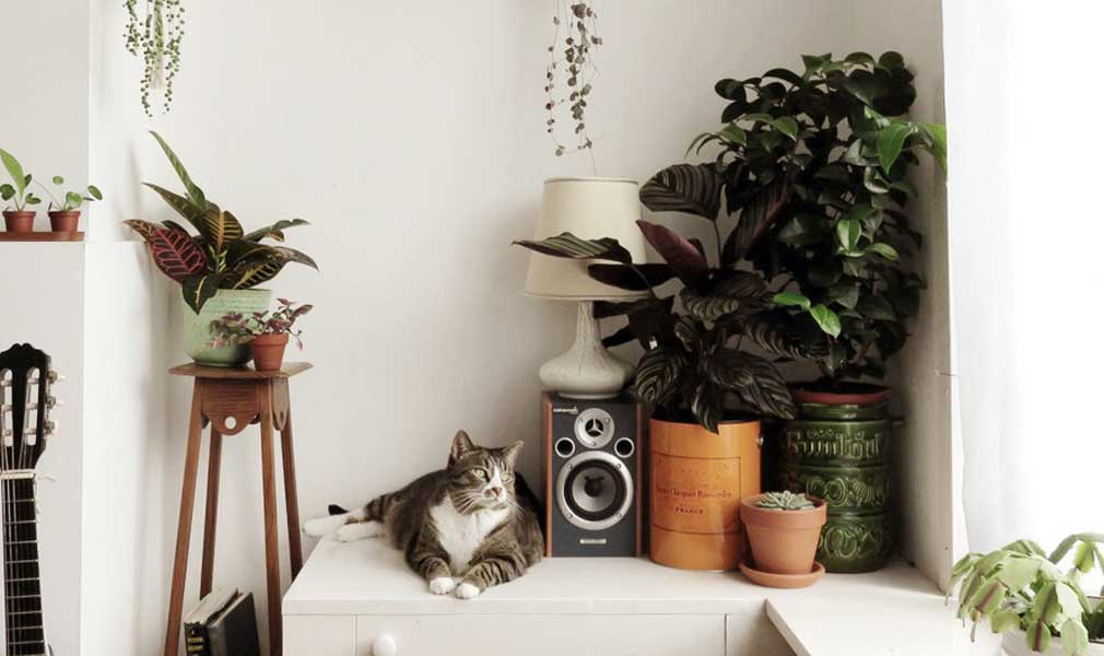 Indoor Plants and your Pets - How to Keep it Safe