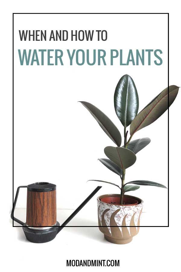 how-to-water-indoor-plants