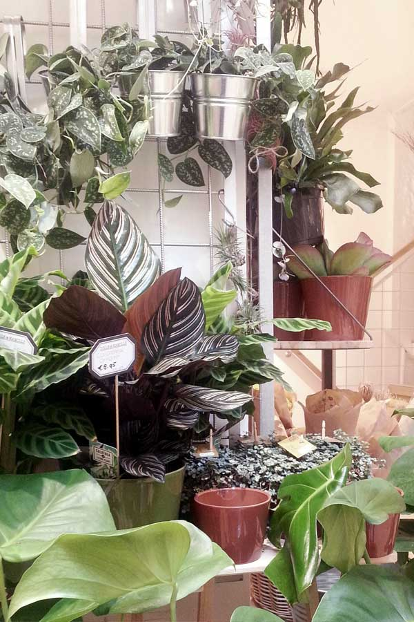 indoor-plant-shop