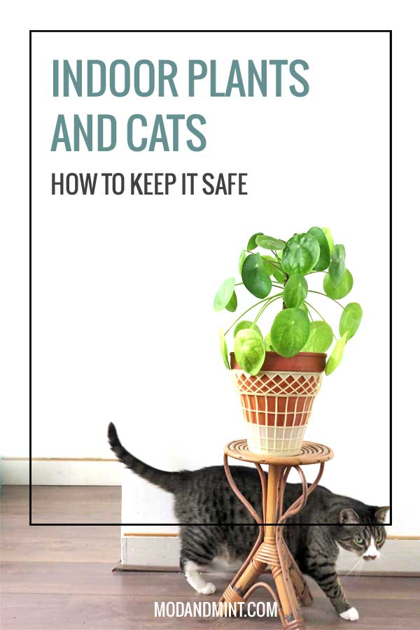 safe-plants-for-cats