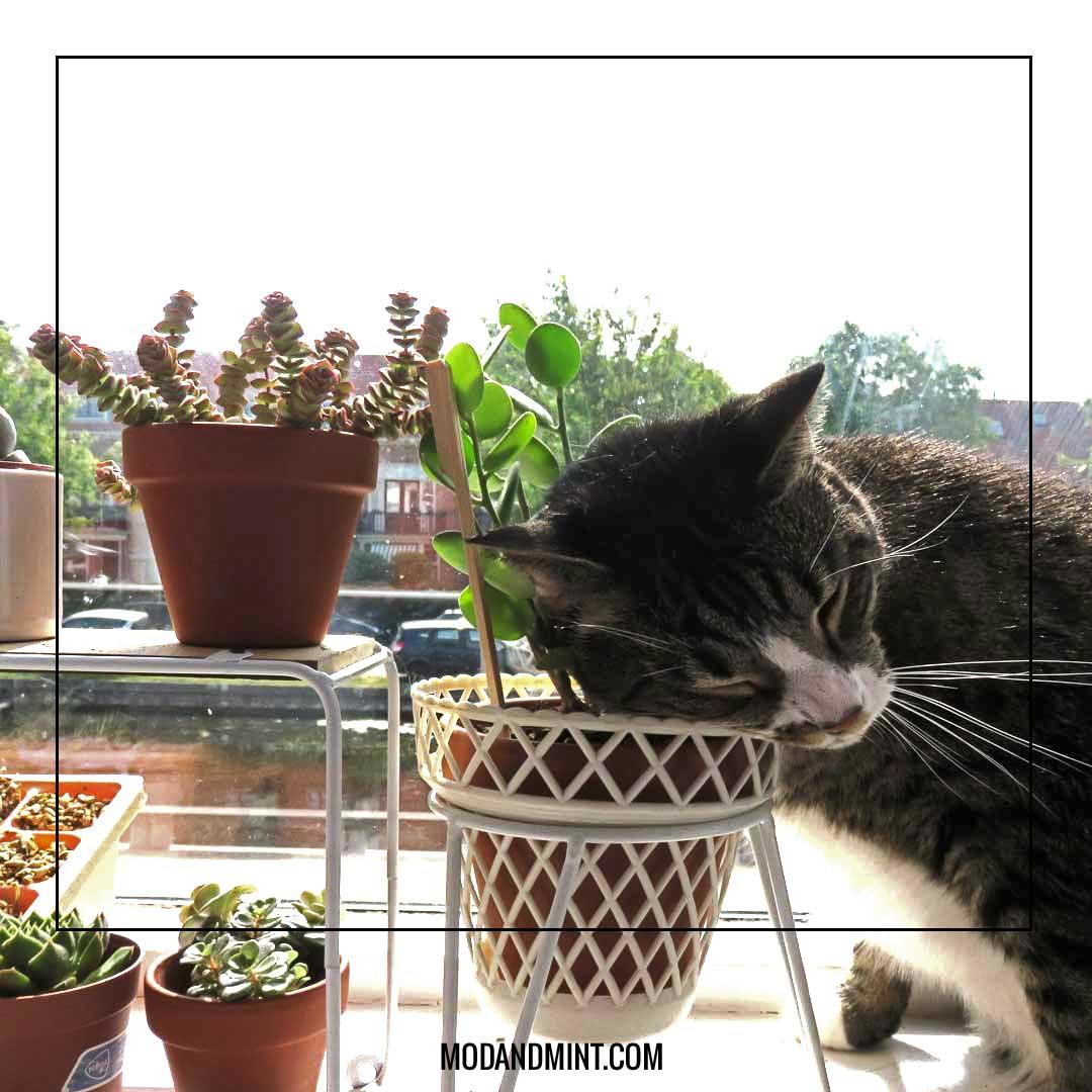succulents-and-cat