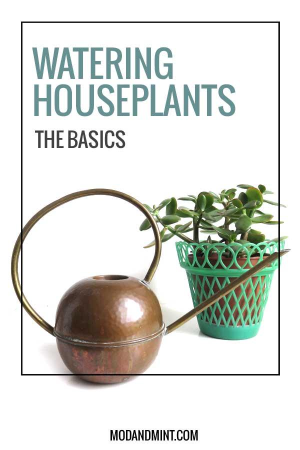 watering-houseplants-basics