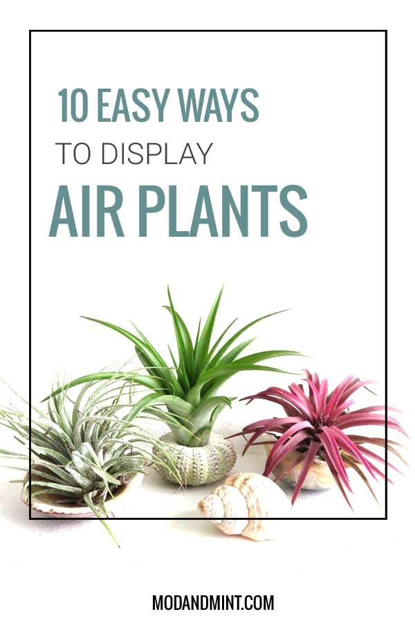 10 easy ways ro display air plants