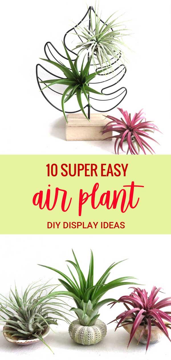 10 easy diy air plant display ideas