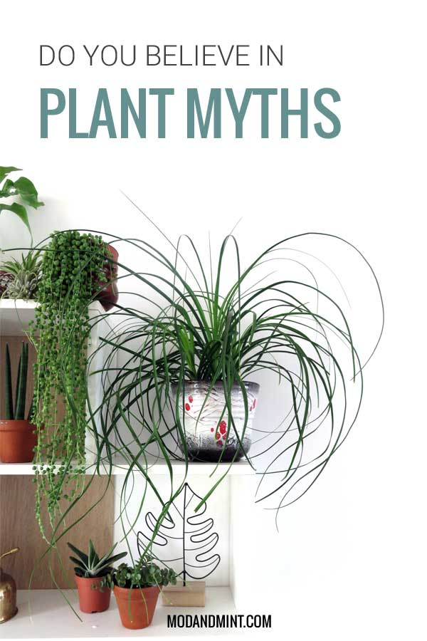 7 indoor plant myths