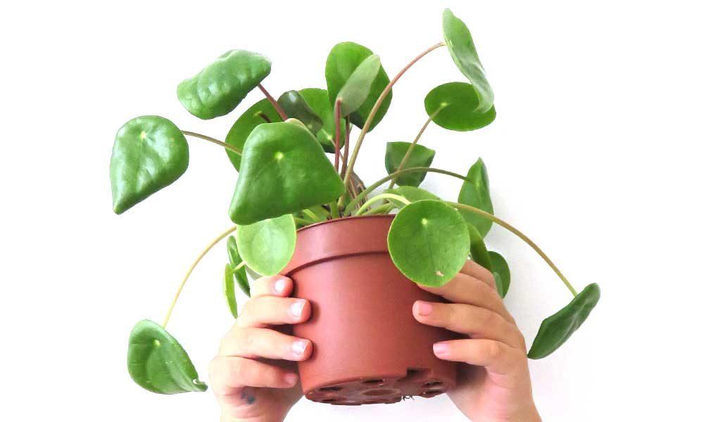 indoor plants and kids