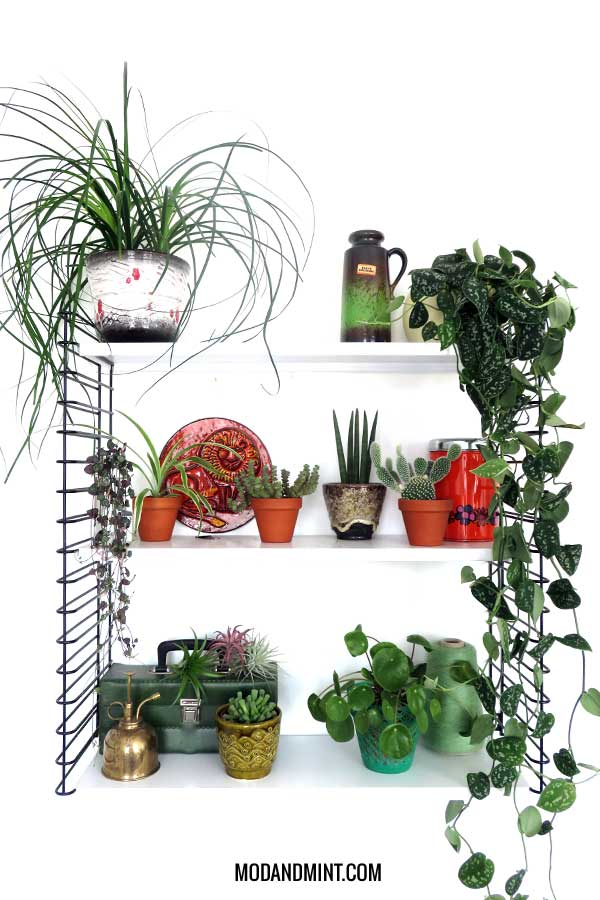 houseplant myths demystified