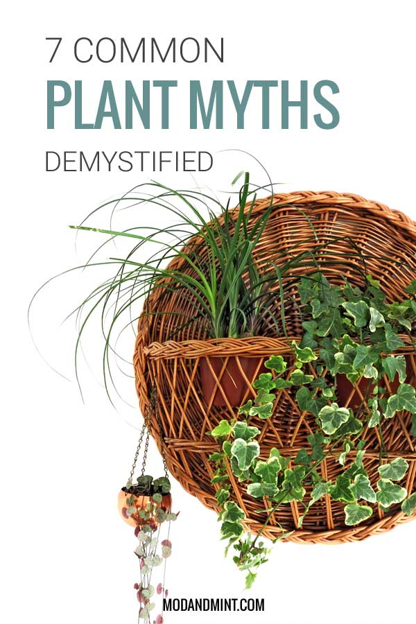 7 common plant myths demystified