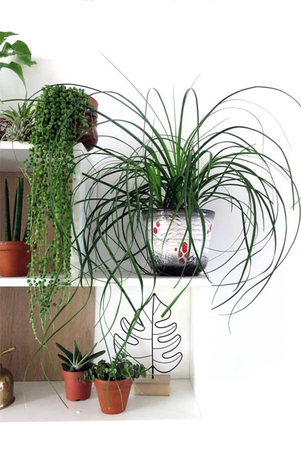 Plant Shelfie Houseplant Myths