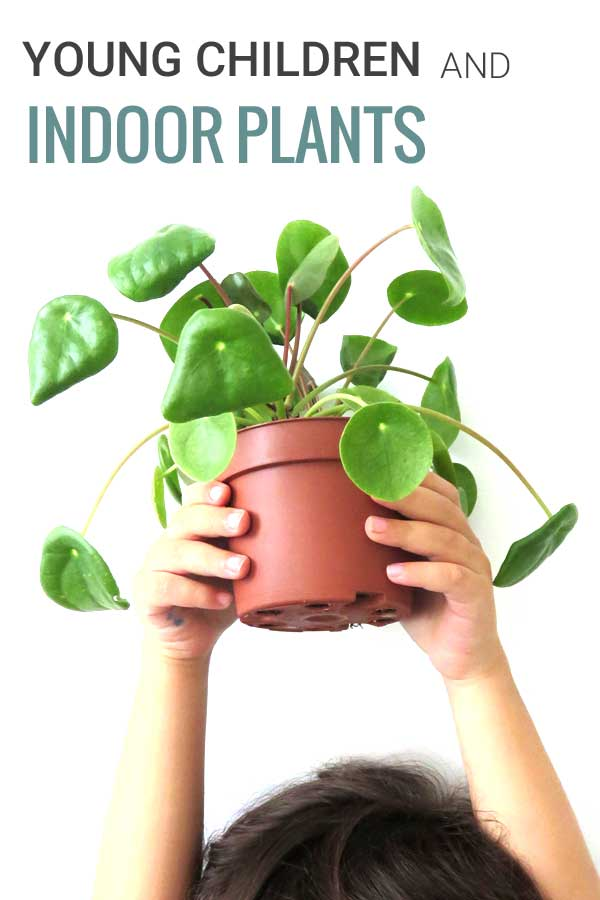 Young Children and Indoor Plants