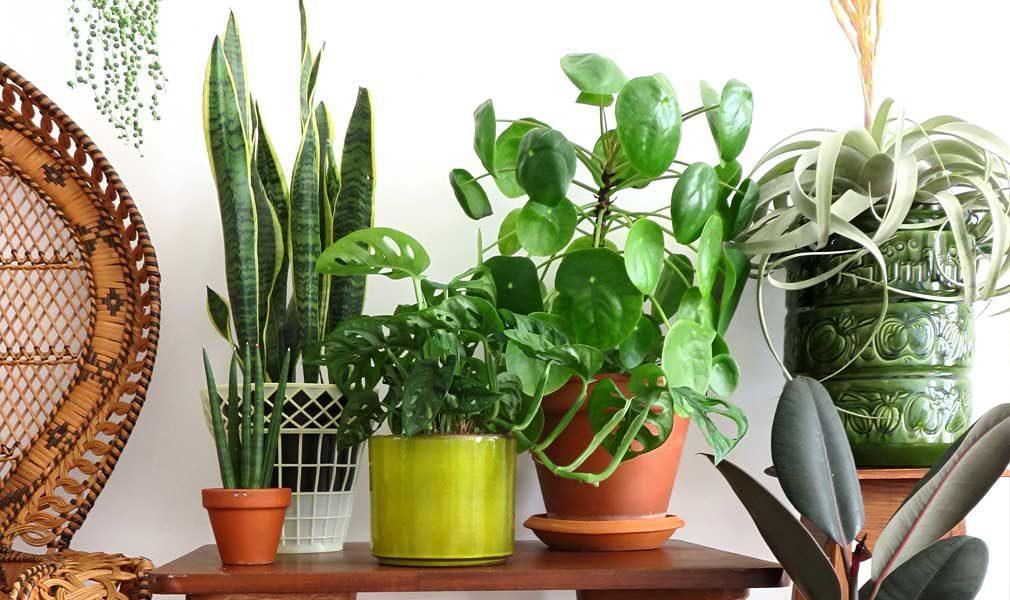 indoor plant care schedule