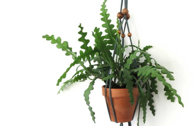DIY Macrame Beaded Plant Hanger