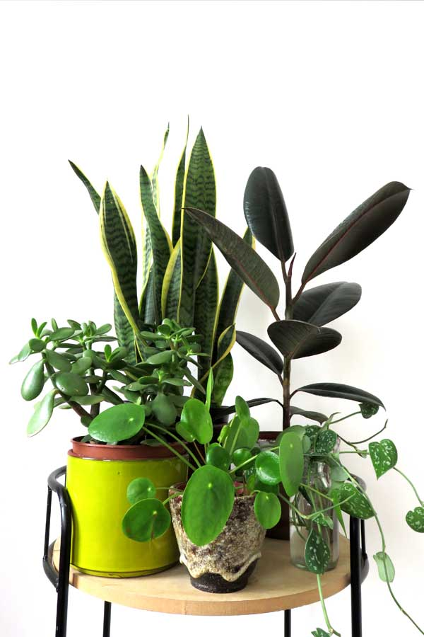 Group your houseplants to increase humidity
