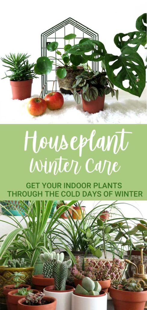houseplant winter care tips