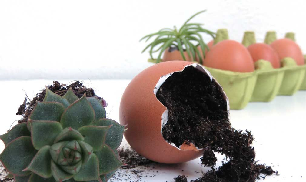 4 ways to use eggshells for your houseplants