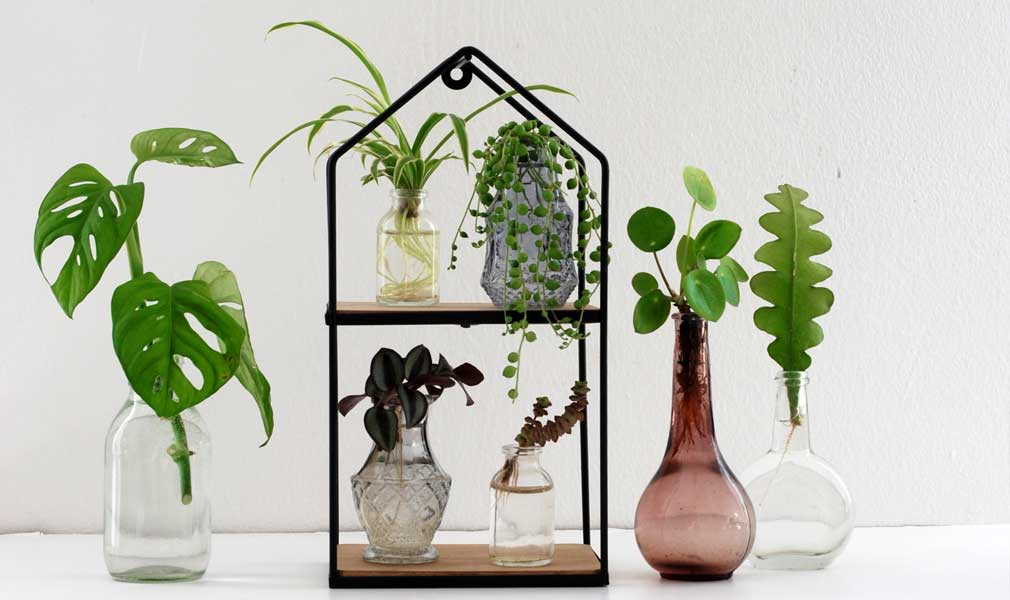 How To Water Propagate Plants And Make New Plants For Free