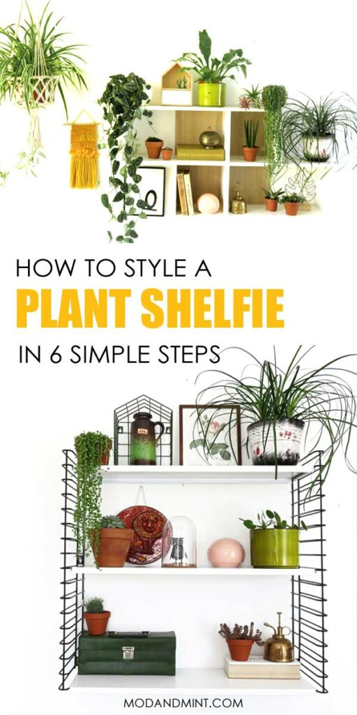 How to Style and Decorate a Plant Shelf in 6 Simple Steps