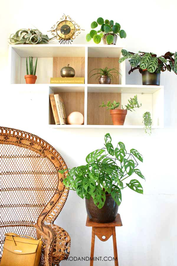 Indoor Plant Wall Shelf and Vintage Peacock Chair.
