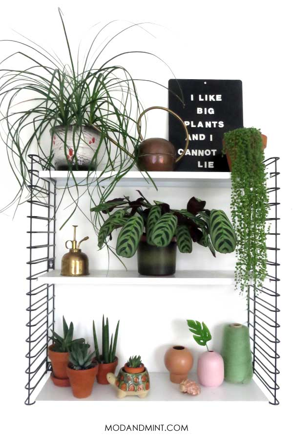 Decorated tiered wall shelf filled with houseplants.