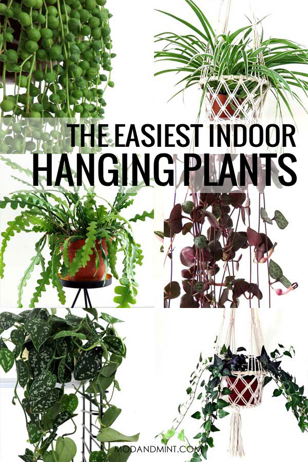 The easiest indoor hanging plants with collage of photos of different types of hanging plants.