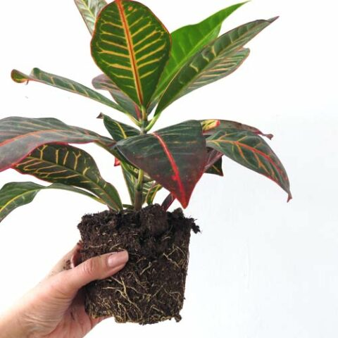 How to Repot your Indoor Plant