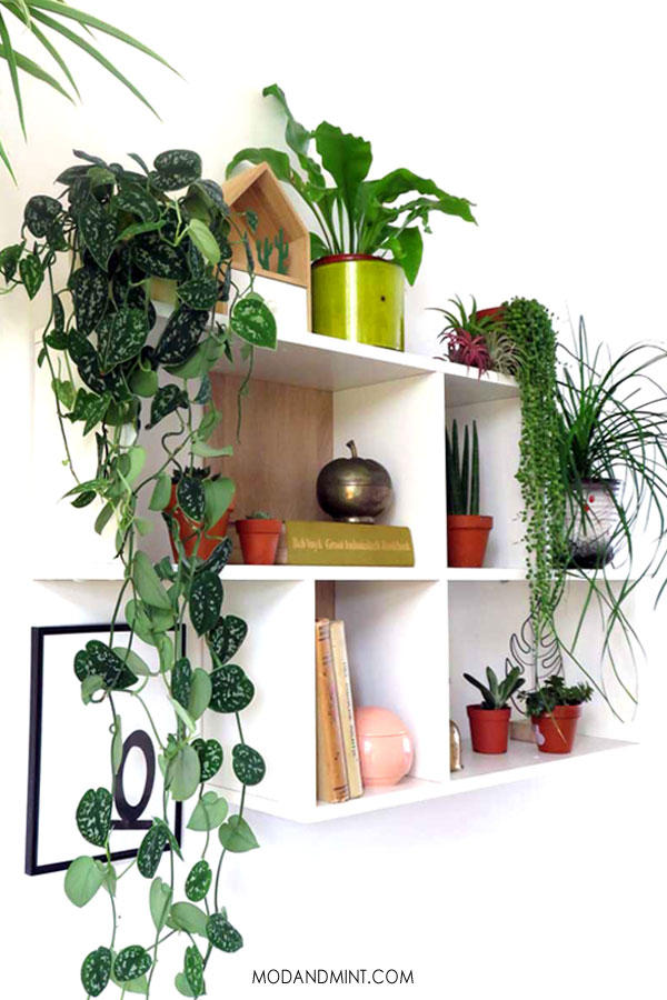 Indoor plant filled wall shelf.